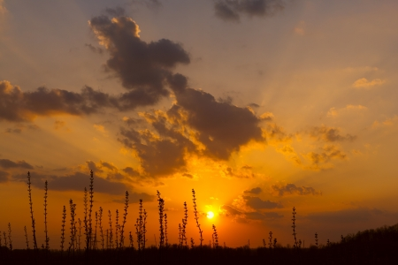 Nice sunset in steppe, Ukraine