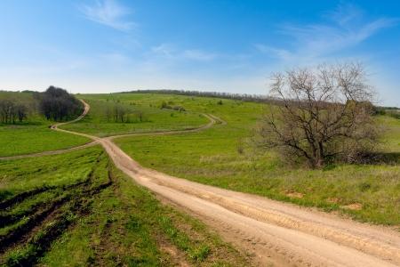 rut roads on meadow photo