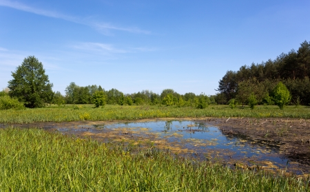 landscape with Swamp in forest Stock Photo