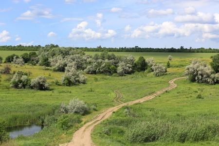 rut: Landscape wit rut road on green meadow