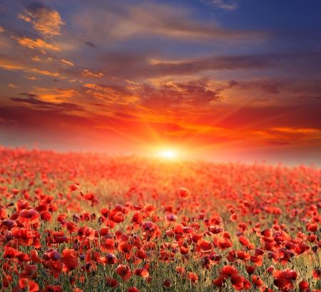 poppy field: Mooie zonsondergang over papavergebied