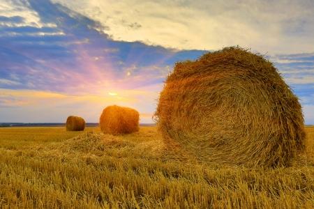 hayroll: hayrolls on meadow against sunset background