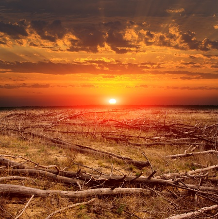 dramatic sunset over dead forest photo