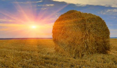 hay-roll on meadow against sunset background  photo