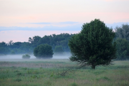 Morning scene on meadow with fog Stock Photo