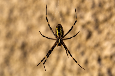 arachnophobia animal bite: Spider on web - macro shoot