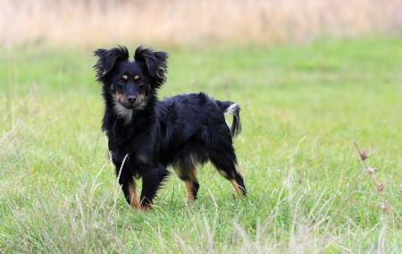 meadow  grass: peque�o perro de la pradera de c�sped