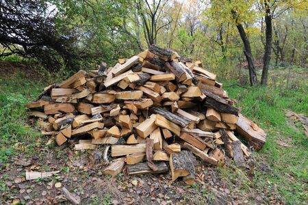 firewood heap in autumn forest photo
