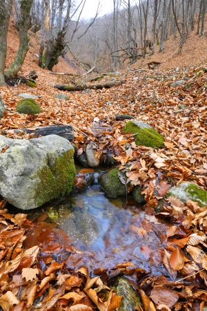 welling: water welling up from the earth in autumn forest Stock Photo