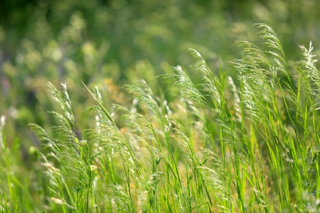 heads of grass - shallow DOF photo  photo