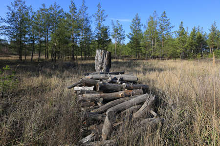 old firewoods on meadow in forest photo