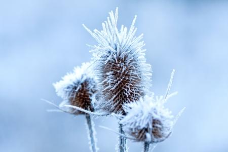 frozen plants - macro shoot with shallow focus