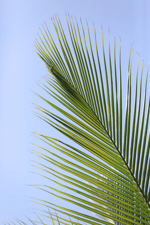 green palm brunch on sky background Stock Photo