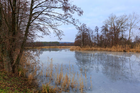 frozen river: Scene with frozen river in forest