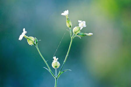 Nice wild flowers in back-light - shallow DOF photo  photo