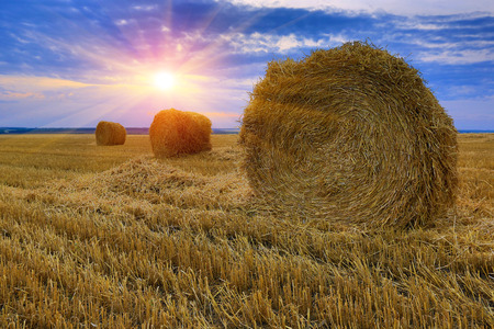 hayroll: hay-roll on meadow against sunset background
