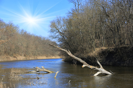 old wood in river water at spring time photo