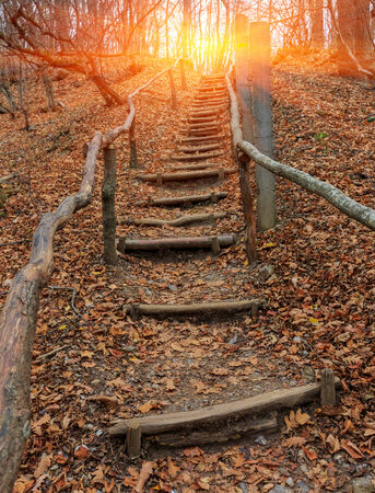 wooden stairs: scene with wooden stairs in autumn forest Stock Photo