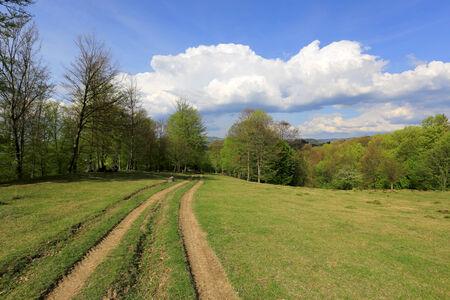 rut: rut road on green meadow in Carpathians