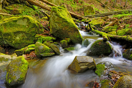 ravine: mountain brook among green stones in wild forest