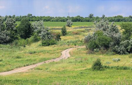 rut: rut road across meadow in summer steppe