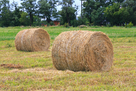 rebelling: hay rolls on agricultural field  at summer time