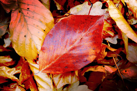 leafage: autumn leafage - absreact natural background