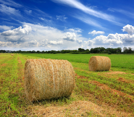 rebelling: agricultural field with hay rolls at summer time   Stock Photo