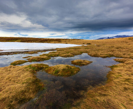 Flooded meadow in Carpathian mountains. Ukraine, spring time