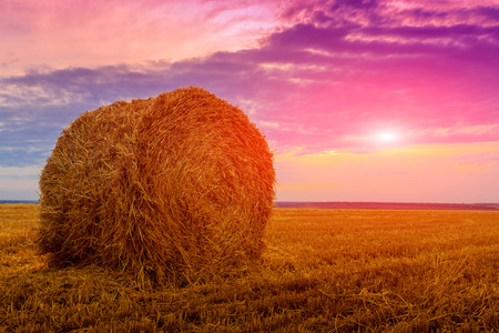 hay roll on aricultural field against  sunset background