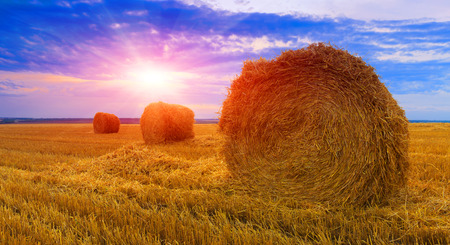 hay rolls on meadow against sunset background Stock Photo