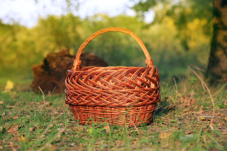 Nice brown basket in autumn forest photo