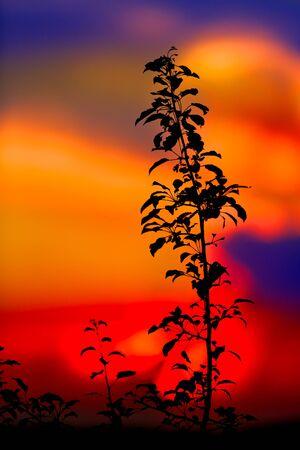 sky brunch: Tree brunch against sunset sky background