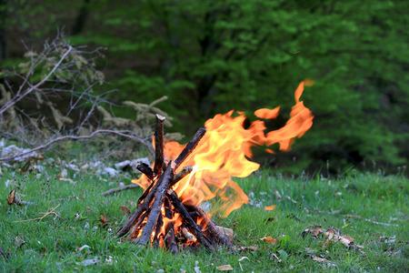 Campfire on green meadow in forest Reklamní fotografie
