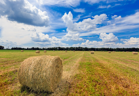 rebelling: agricultural field with hay rolls at summer time
