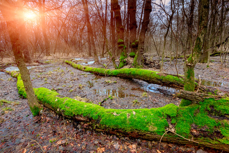 sunset on bog in deep forest photo