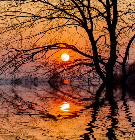 Evening sunset sun and tree with water reflection
