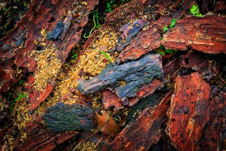 cortex: Pine cortex abstract natural