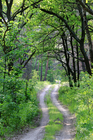 rut: Landscape with rut road in green forest Stock Photo