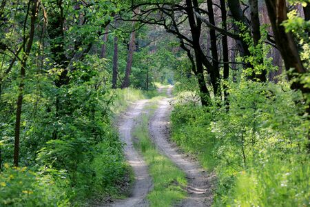 rut: rut road in green forest