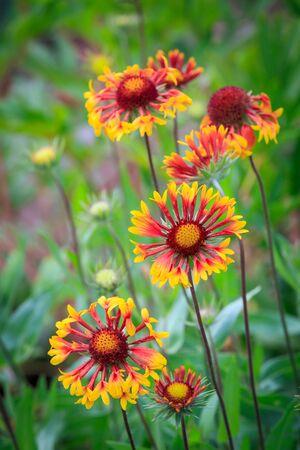 Nice summer flowers in garden