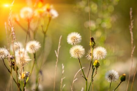 sunny season: nice summer flower meadow in sunny day Stock Photo