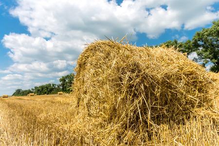 hayroll: Hayroll on crop field n nice sunny day