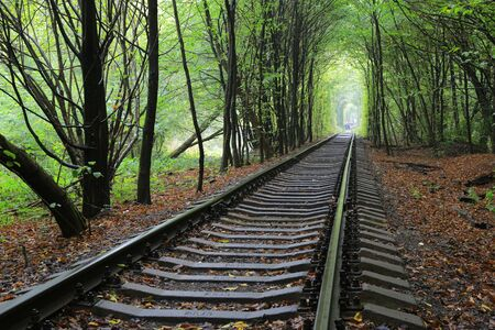 forest railroad: Railway in wet autumn forest