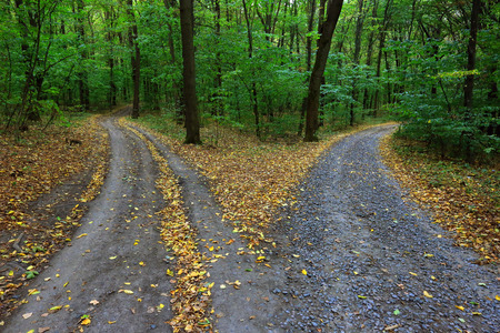 the split: Landscape with fork rural roads in forest Stock Photo