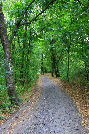 rut: Rut road in green forest at early autumn time