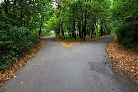 Fork asphalt roads in forest 스톡 콘텐츠