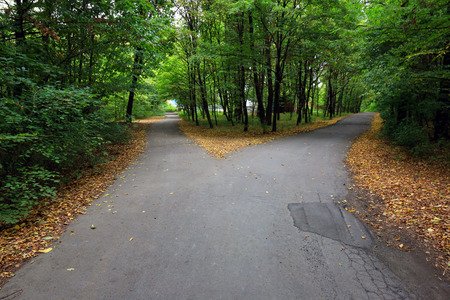 split: Fork asphalt roads in forest Stock Photo