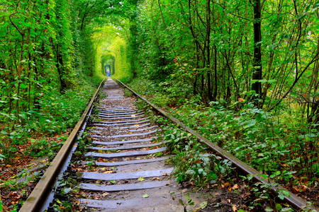 forest railway: railway road in autumn forest