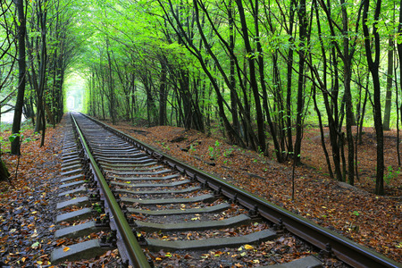 forest railroad: landscape with railroad in wet autumn forest